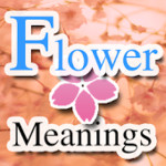 Flower Meanings Dictionary