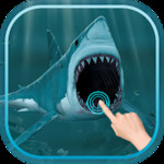 Magic Touch : Shark Attack