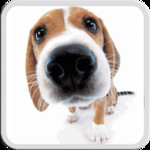 DOG LICKS SCREEN LWP FREE