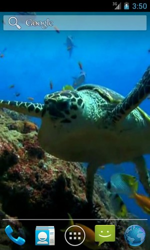 Free Sea Turtle. Live wallpaper. cell phone app