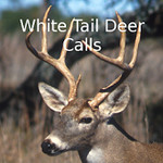 Whitetail Deer Calls