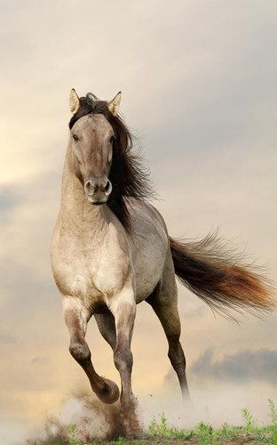 Free Horses Live Wallpaper cell phone app