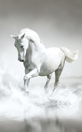 Horses Live Wallpaper screenshot 6