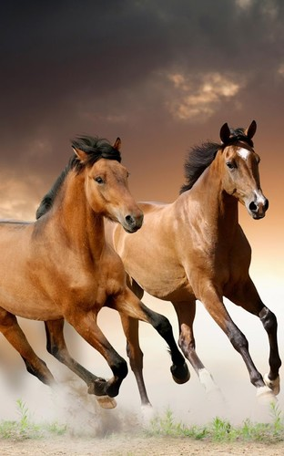 Horses Live Wallpaper screenshot 8